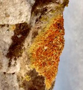 Home 1-10-16 lichen zero degrees in slide 2 copy