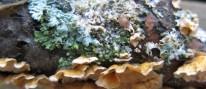 cropped-lichen-5-14-below-arena1.jpg