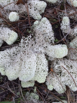 Julie H-florida lichen 1