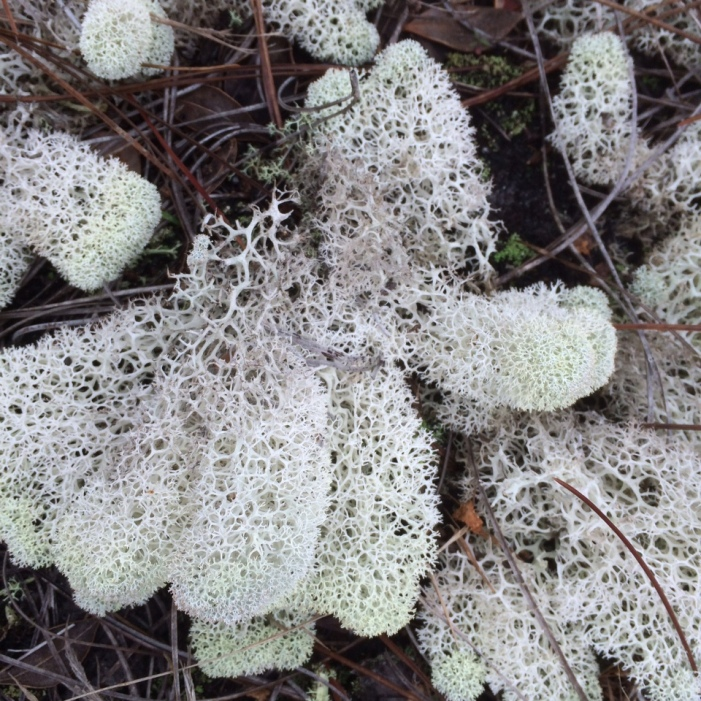 Julie H-florida lichen 1
