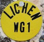 wg-yellow-tag-2