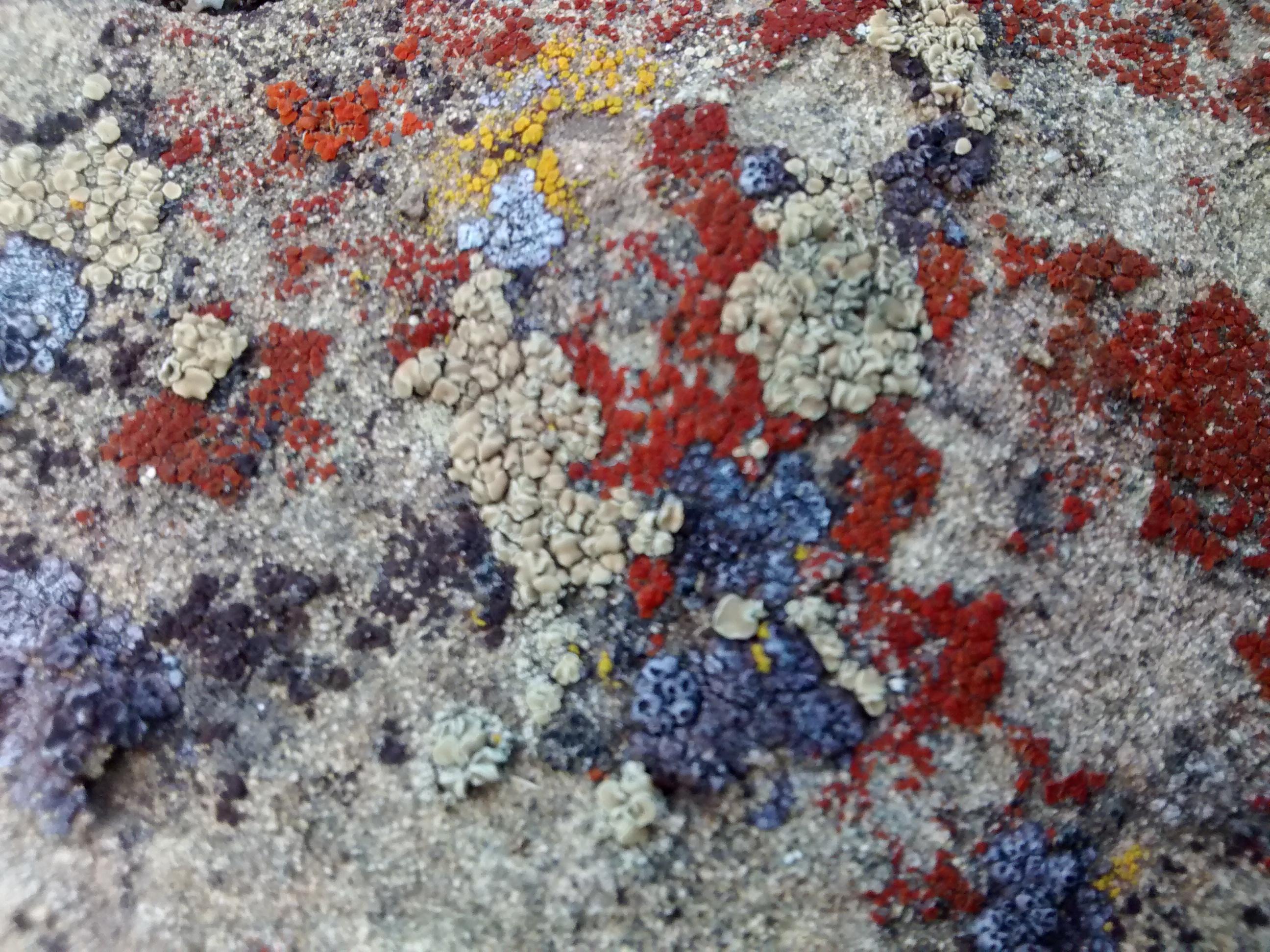 DMCI lichen R4