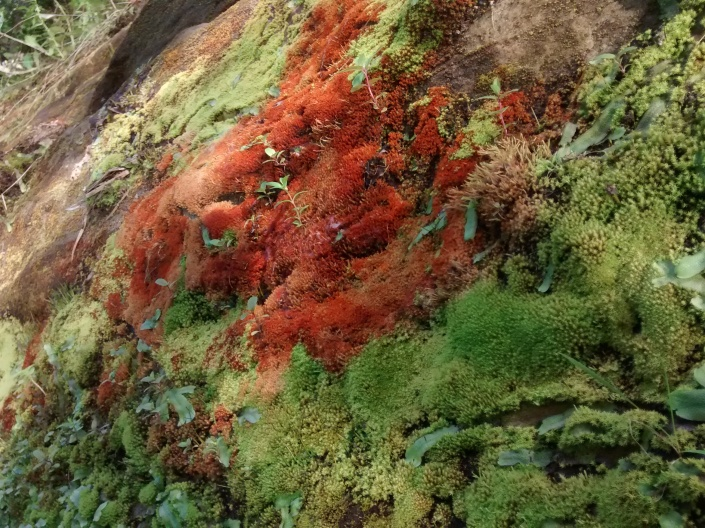 K river Ont-park 8.16 moss