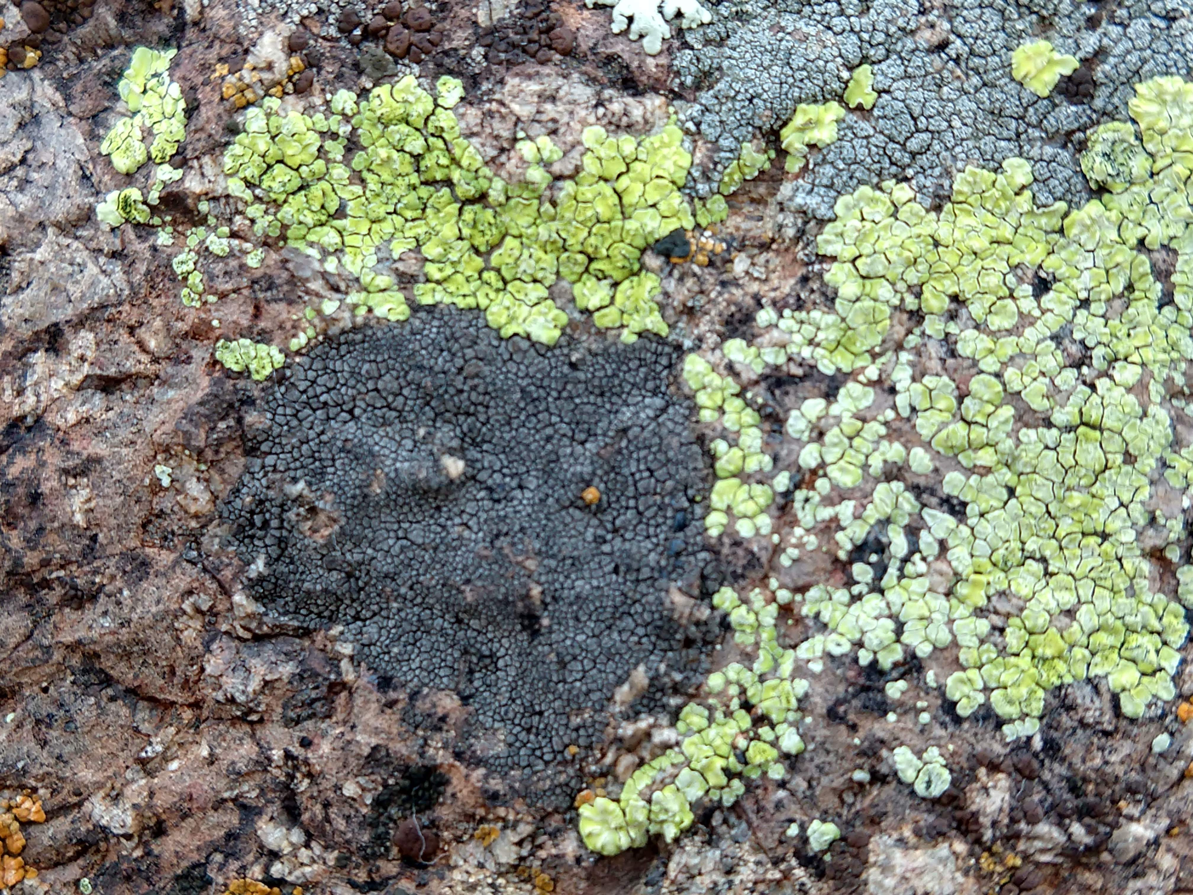 green and black lichen san xavier